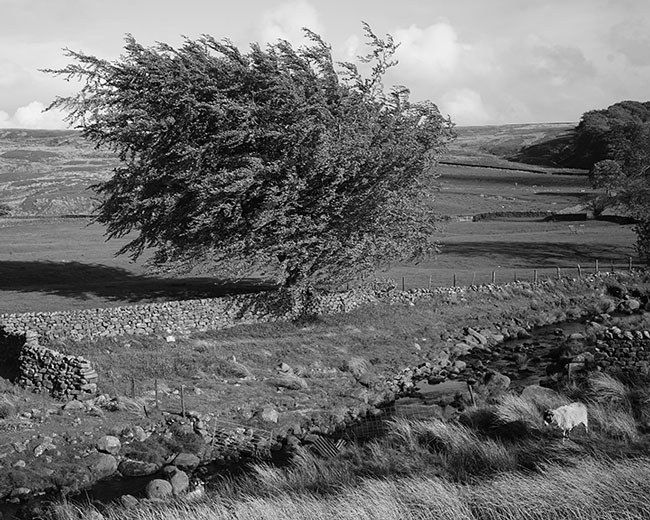 Tarnbrook Wyre Stream In Bowland. Lancashire - Ref: 1304