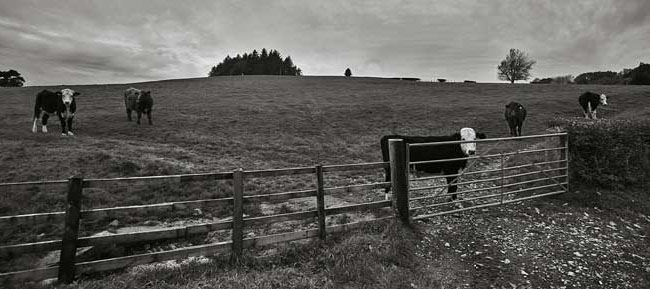 Bulls Eye, Northern Bowland - Ref: 4417