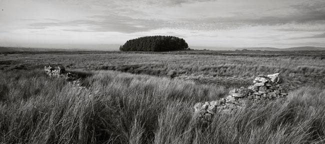 Copse Near Craggs in Bowland - Ref: 00178