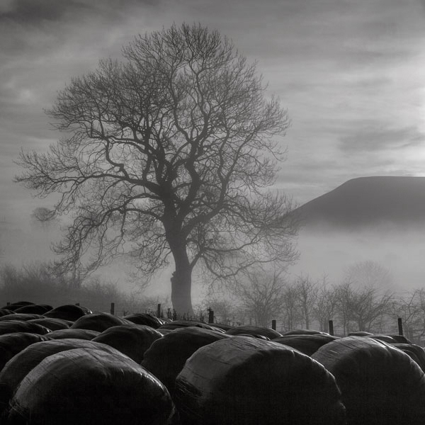 Misty Pendle - Ref:6764
